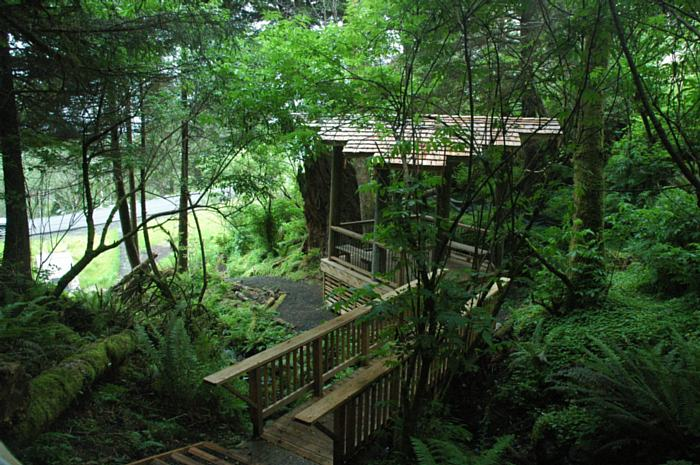 Beautiful Forest View from One of Our Creekside Yachats Lots for Sale